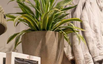 Lululemon elevates store experience with live plants