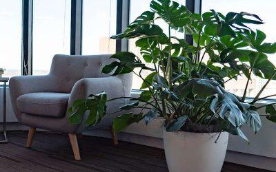 Startup enhances open floor layout with biophilic design