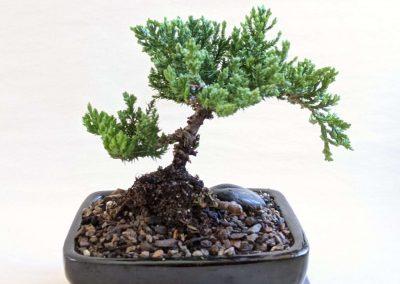 Bonsai Tree Workshop