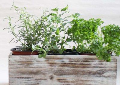 Kitchen Herb Garden Workshop