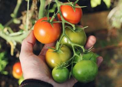 Introduction to Edible (Vegetable) Gardens